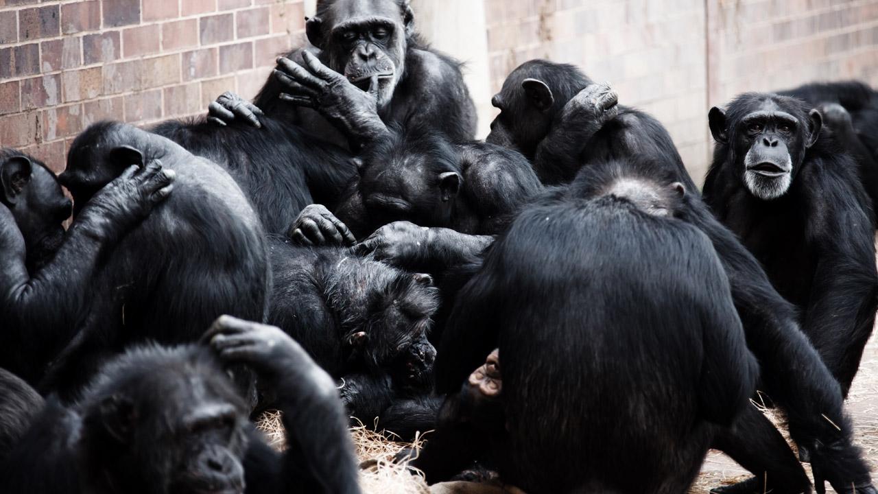Sosyal Darwinizim mi, Karşılıklı Yardımlaşma mı?